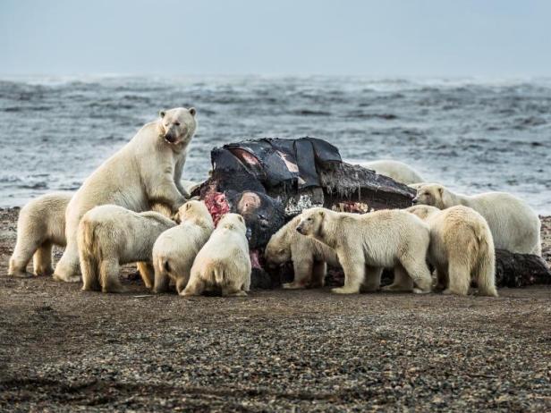 bears on whale.jpg